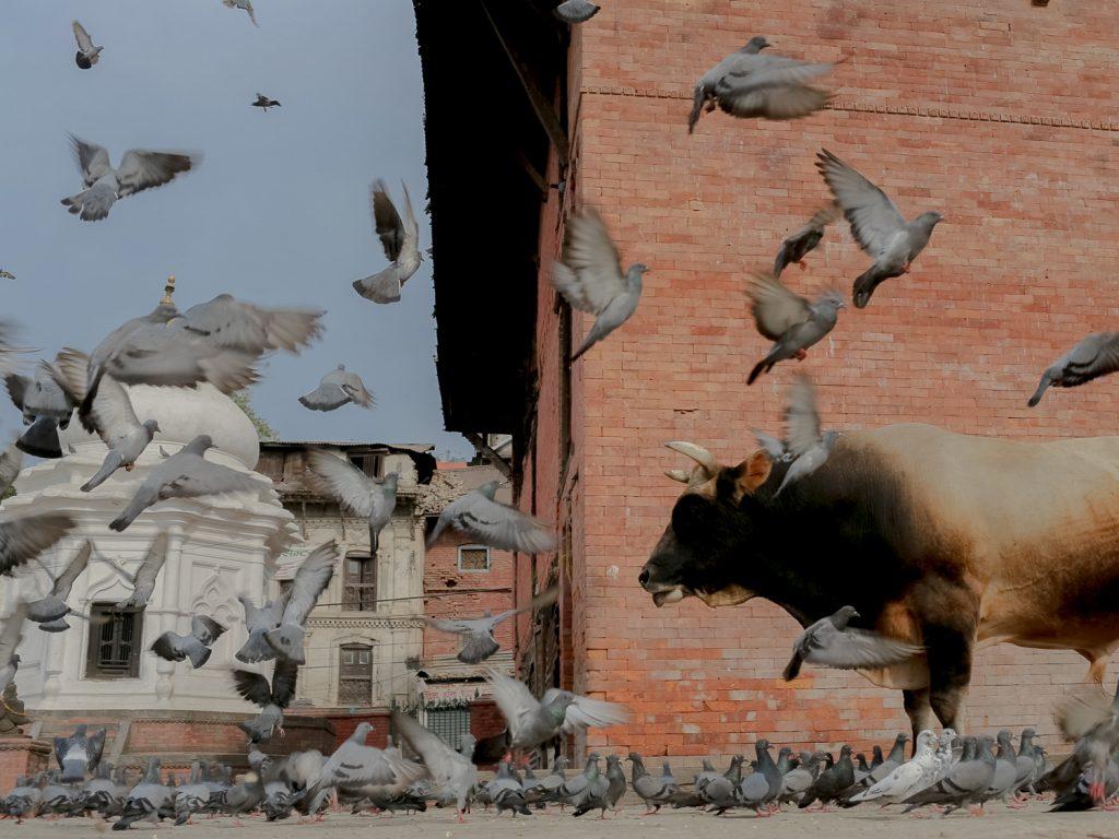 Nepal Quake-16
